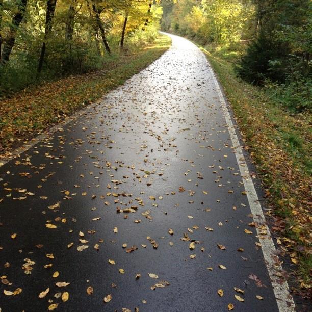 Herbstlicht  by foneart.de